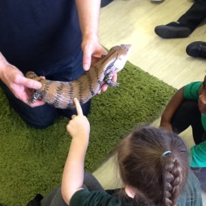 Nursery Child meeting a skink