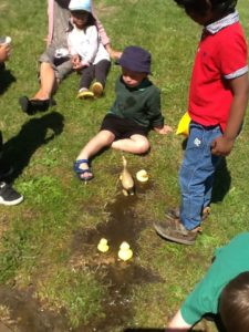 Nursery children playing with plastic ducks in a muddy puddle